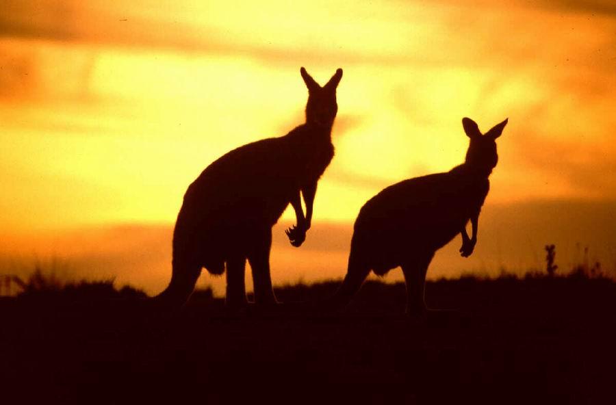 Australija 2