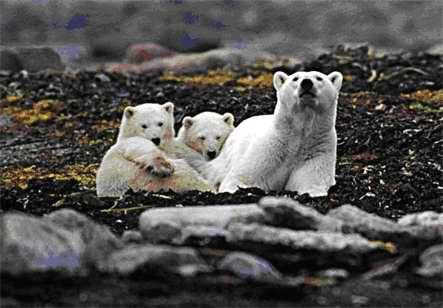 Medvjedi Bear2%20%2810%29