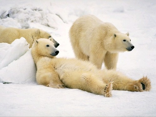 Medvjedi Bear2%20%2835%29