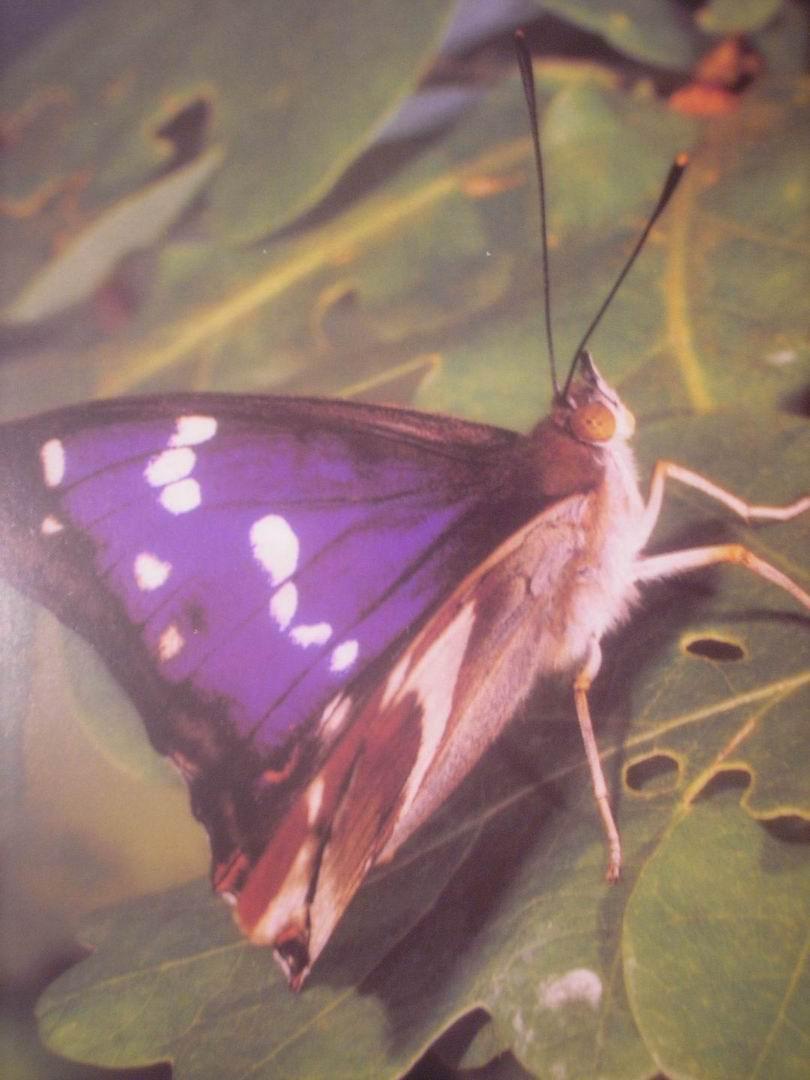 Leptiri PC290117
