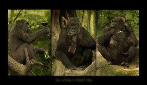 Majmuni Untitled2