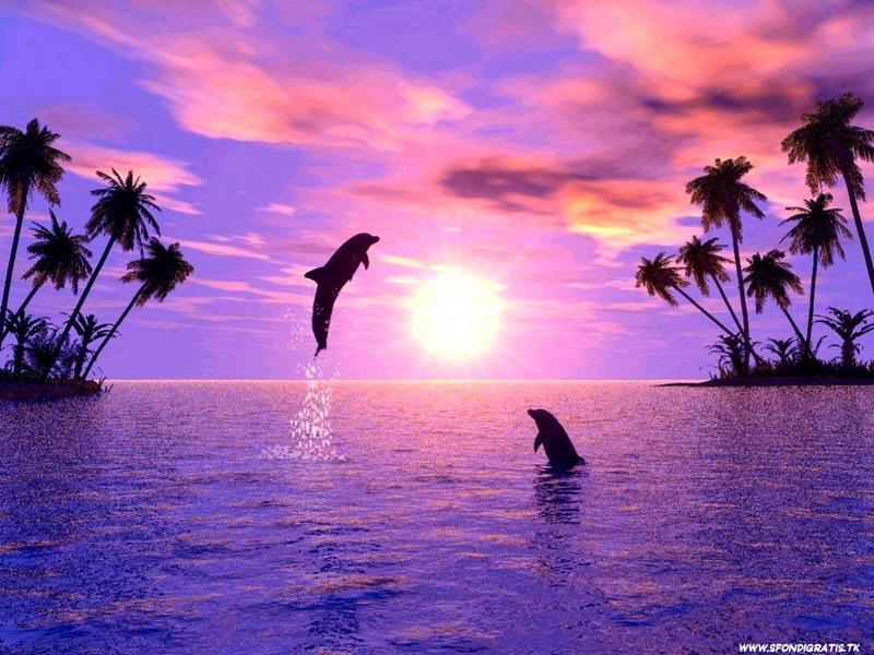 http://www.znanje.org/i/i27/07iv02/07iv0209/Slike/delfin12.jpg